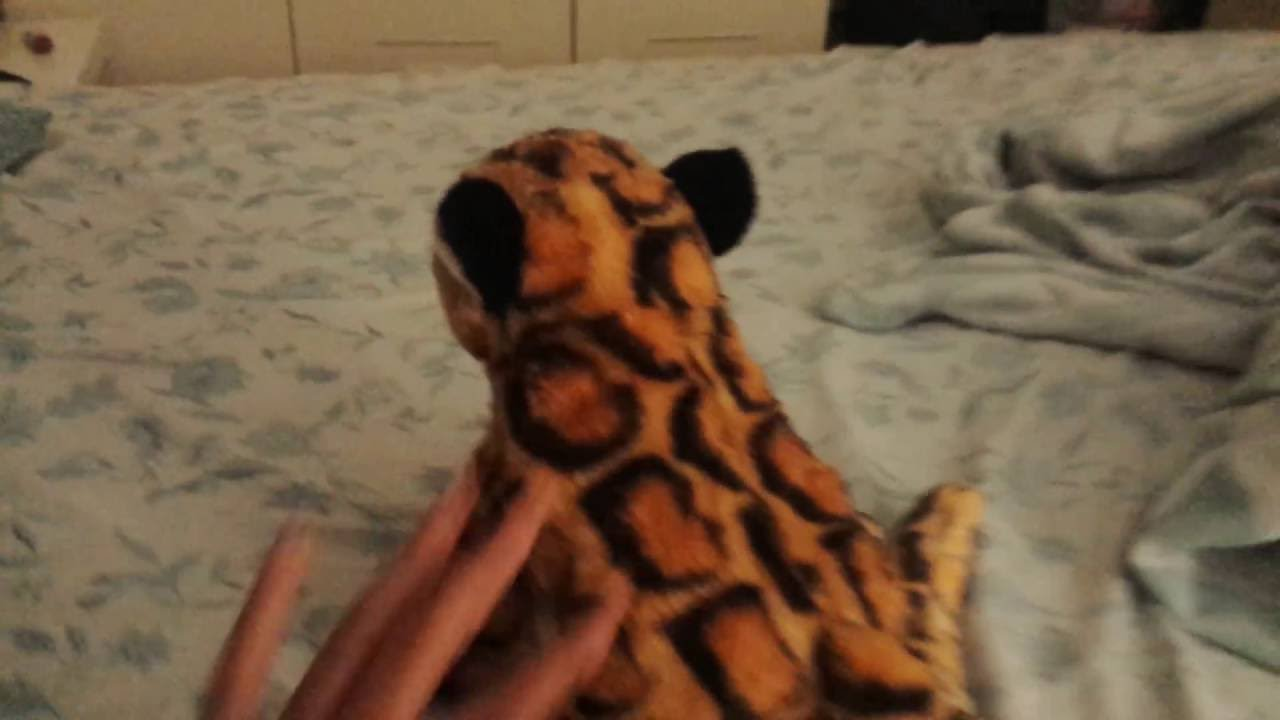 Stuffed Animal Clouded Leopard Youtube