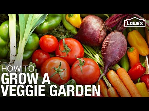 How to Grow a Vegetable Garden | Gardening Tips and Tricks
