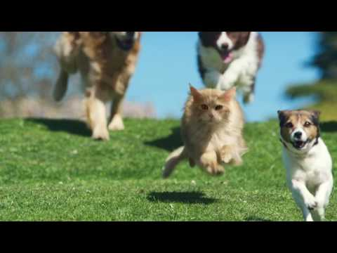 Top funny dogs videos on commercial adverts - Cute dogs videos compilation