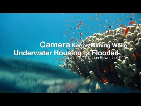 Canon Powershot D20 Films While Underwater Housing Is Flooded