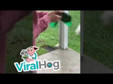 Hurricane-Makes-Bathroom-Time-Difficult-for-Dog-ViralHog