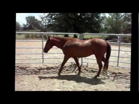 Leos Little Leroy 5yo Sorrel Gelding. Cute Horse! (SOLD)