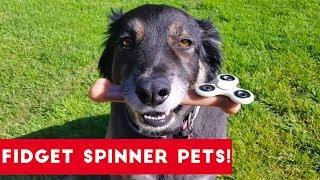 Funniest Fidget Spinner Pets | Funny Pet Videos