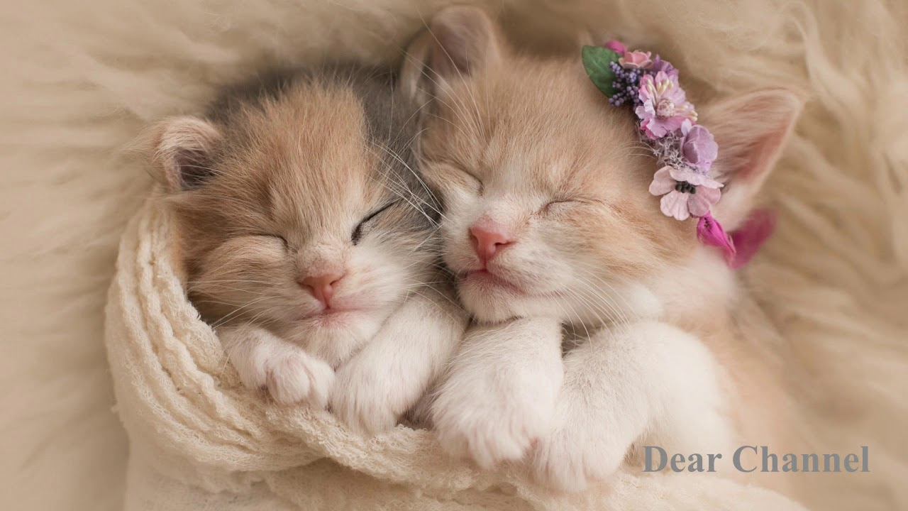 50 Cute Cats Picture You Prefer In Dp Adorable Cats Cat Lovers Cat Haters Youtube