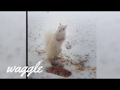 Funny and Weird Albino Animals | Pet Compilation Video