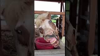 Funny Animals Cute Animals, Animal Kingdom, Funniest Videos, Musically, Tik Tok