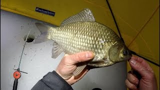 Fishing for big crucian at night