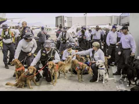 Superpower Dogs | Indiegogo Campaign