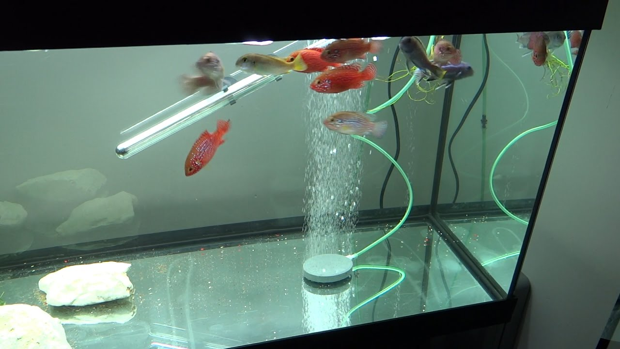 aquarium fish tank air bubble stone air stone for oxygen