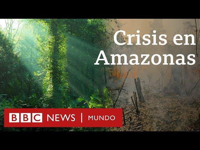 Incendios En El Amazonas El Gobierno De Bolsonaro Ahora