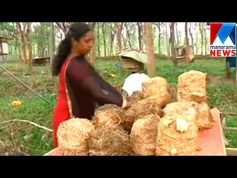 Mushroom cultivation without mushroom | Manorama News