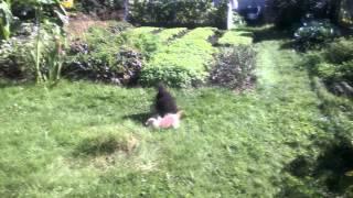 Cat VS Dog Коты против собак