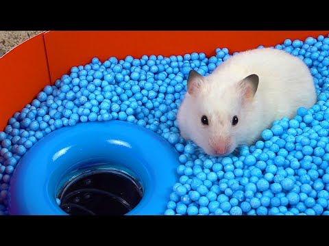 Pool Maze For Hamster - Rainbow Pyramid Maze