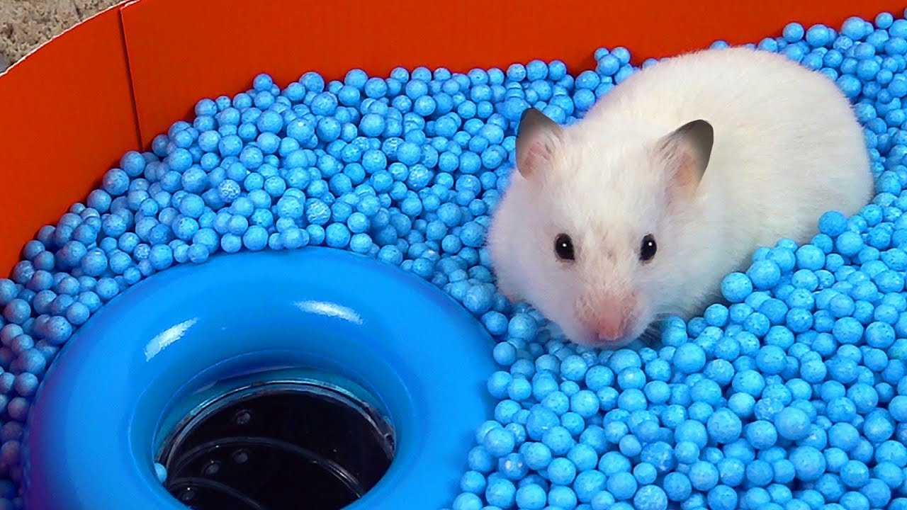 Download Pool Maze for Hamster - Rainbow Pyramid Maze