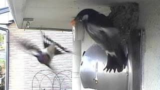 何ていう鳥だろう?デカいヤツ.