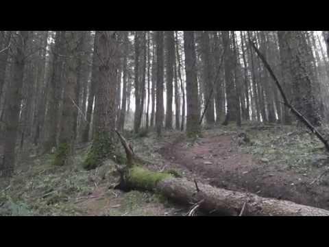 Rostrevor - Bin Run