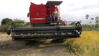 Cosechando arroz en la granja 6