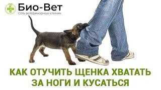 Как отучить щенка хватать за ноги и кусаться