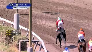 Vidéo de la course PMU PREMIO VIEJO ROBLE