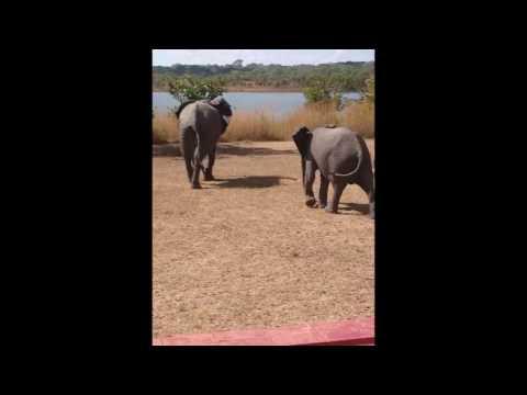Up Close with Elephants in Kasungu National Park, Malawi