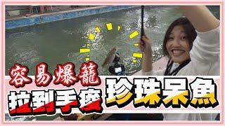 #一個禮拜放500斤魚 超敢放珍珠呆魚的瘋老闆!釣也釣不完瘋狂上鉤!【老婆】