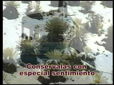 Reynaldo Armas   Pa Que Te Acuerdes De Mí   Karaoke ST