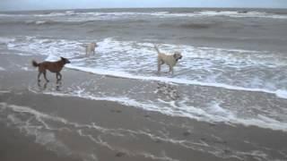 Hondenuitlaatservice De Uitlaatjuf