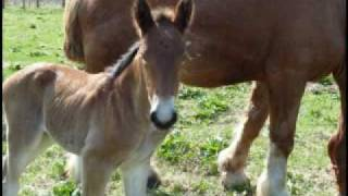 Save Racehorses in Japan - 競走馬を救え!プロジェクト