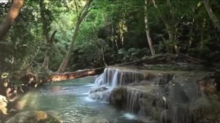 موسيقى جميلة لإستعادة التوازن النفسي والسلام الداخلي؛ صوت الطبيعة Nature Sound 🎼