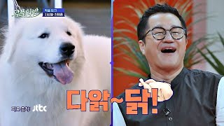개 아빠 지상렬(Ji Sang-ryeol)이 말하는 반려견 상돈이의 생닭 타령 악플의 밤(replynight) 13회