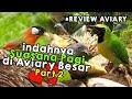 Indahnya Suasana Pagi Di Kandang Aviary Besar Kita Kasih Makan Burungnya Biar Ngumpul  Mp3 - Mp4 Download