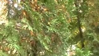 Ботанический сад Пед Унив Волгоград