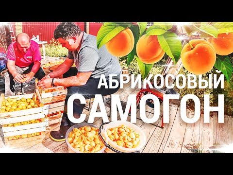 Самогон из абрикосов / Абрикосовый дистиллят.