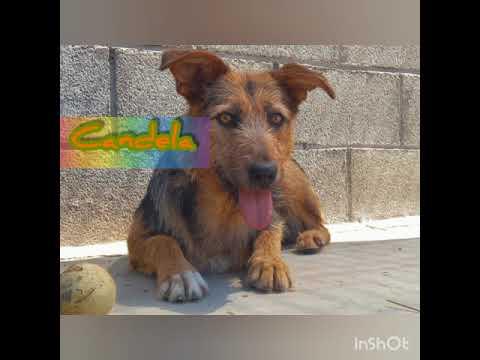 Candela, Rei, Pinpon yLuna perros en adopción en la protectora para animales Pirineos de Jaca Huesca
