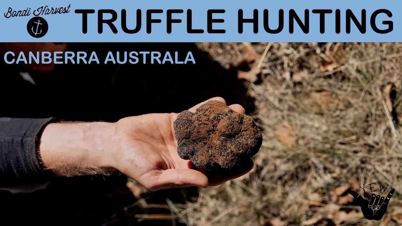 Truffle Hunting In Australia
