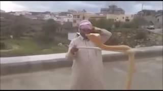 سعودي من النماص يلعب بأفعى كوبرا خطيرة @ @ #مجنون نت