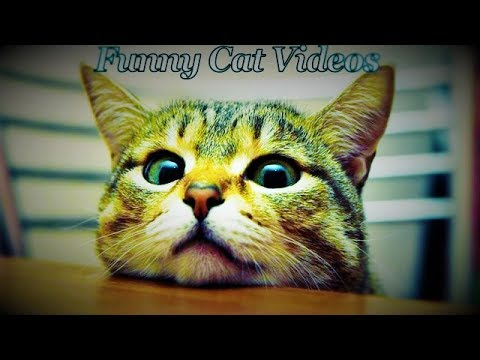 Funny Cats Video  || Funny Cat  Compilation 2017 || Hot Pranks