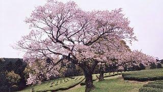 《伝統と革新に挑む 表現者たち》 特集「ニッポンの美」染織芸術をはぐ...