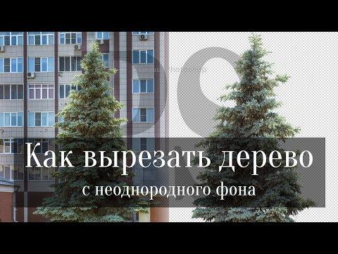 Как вырезать деревья с неоднородного фона в Фотошопе