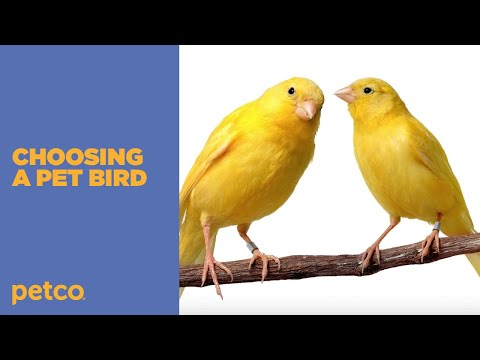 How to Choose the Best Pet Bird for You Petco