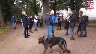 Zoekactie naar vermiste pup Liv in Ommen