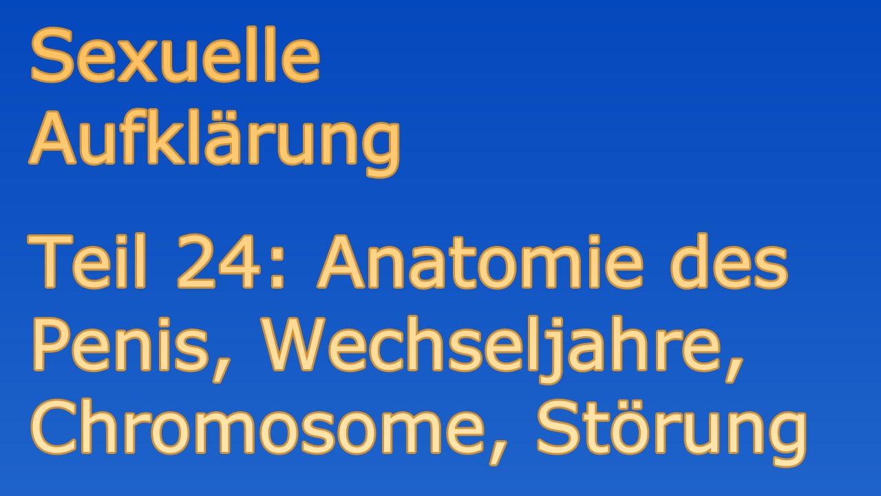 Aufklärung Sexualität 24 Anatomie des Penis, Wechseljahre ...