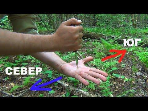 Как ориентироваться в лесу по часам