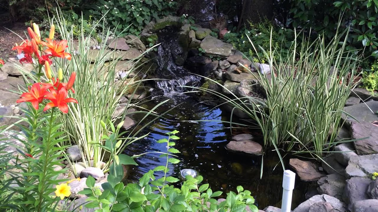 Custom koi fish pond build by earthtones landscape design for Koi pond removal