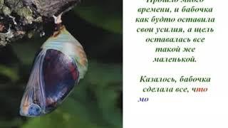 Урок бабочки (или как добиться успеха...)