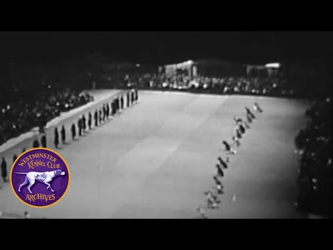 WKC Archives: Obedience Demonstration 1949 Part II