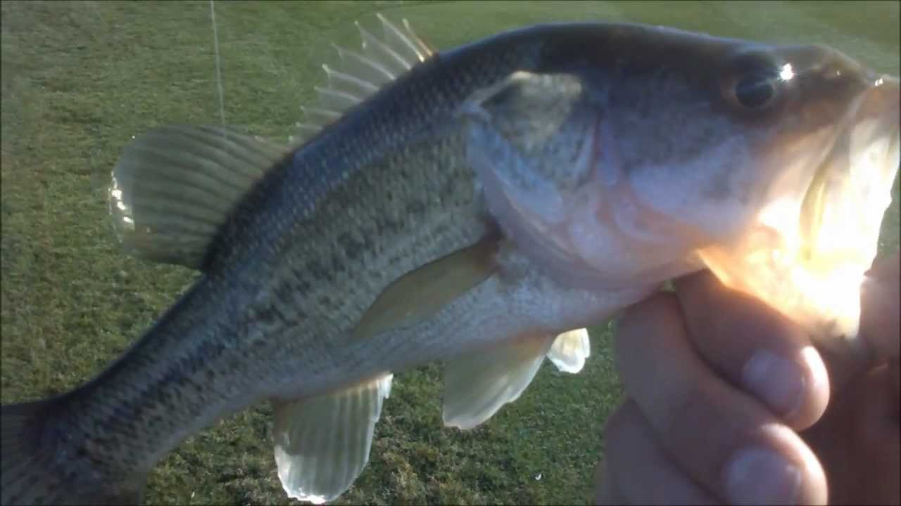 how to fish pre spawn bass
