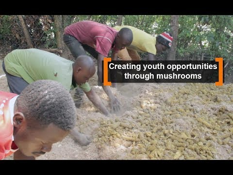 Kenya: Creating youth opportunities through mushrooms