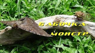 Vlog. Что за насекомое?/Бабочка- Монстр 🤘🦋/Sonido De La Cigarra