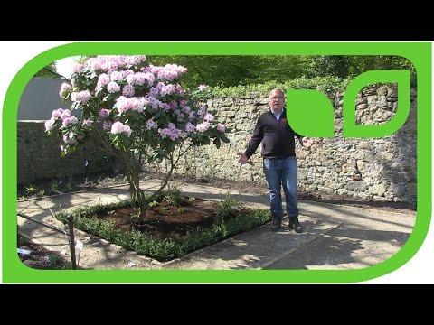 Paradiesgärtlein mit dem Rhododendron-Baum